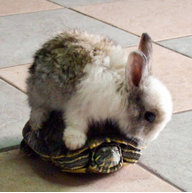 Turtlebunny