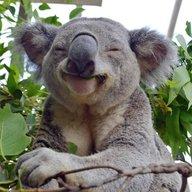 Moody koala