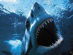 sharkyslo
