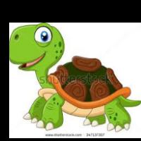 tortoise14