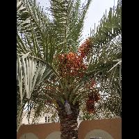 Abu -Khulzat