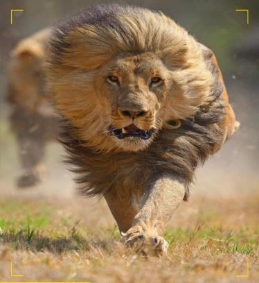 lionheart1910