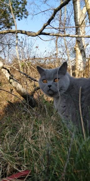 Gadgetcat